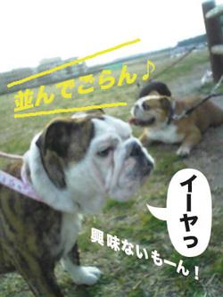 Photo_249