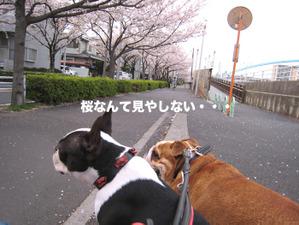 Photo_291