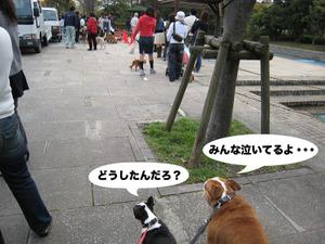 Photo_318