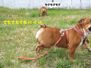 Photo_326