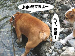 Photo_439